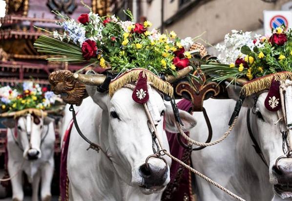Arrivo del Brindellone in Piazza del Duomo - Photo by @alberitivo
